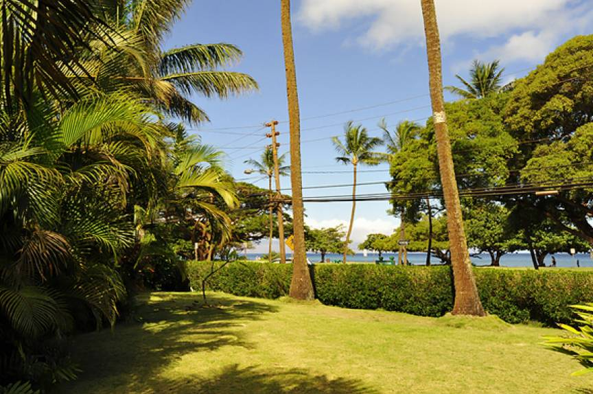 lawn at maui resort